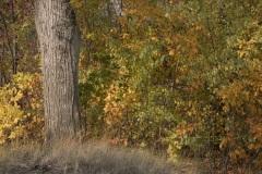 Autumn-Behind-the-Tree