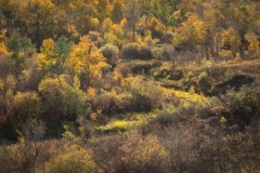 Beaver-Creek-Autumn-in-the-Valley