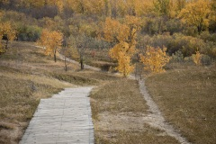 Cranberry-Flats-Steps-to-Autumn-in-the-Valley