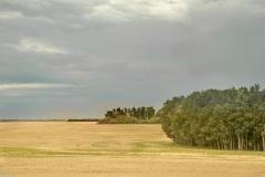 Prairie-Field-Near-Clavet