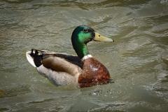 Eyeing-Me-As-He-Swims-By-2-EL