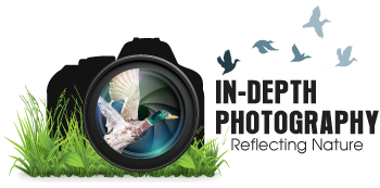 In-Depth Photography
